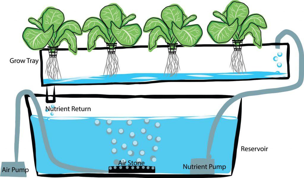 czym są uprawy hydroponiczne, jak działa farma hydroponiczna, po co jest hydroponiczna uprawa