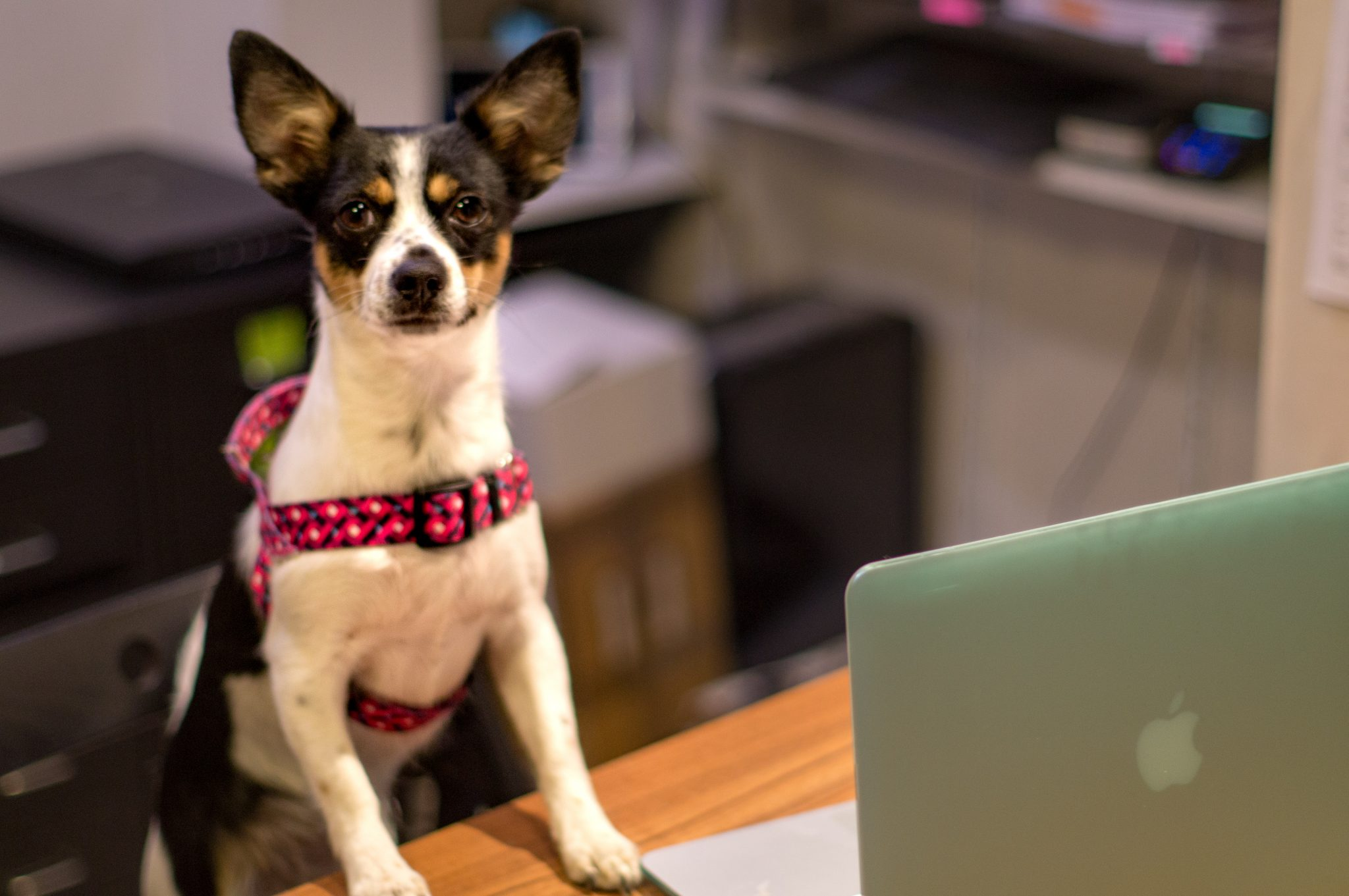 z psem do pracy - bo dlaczego nie?