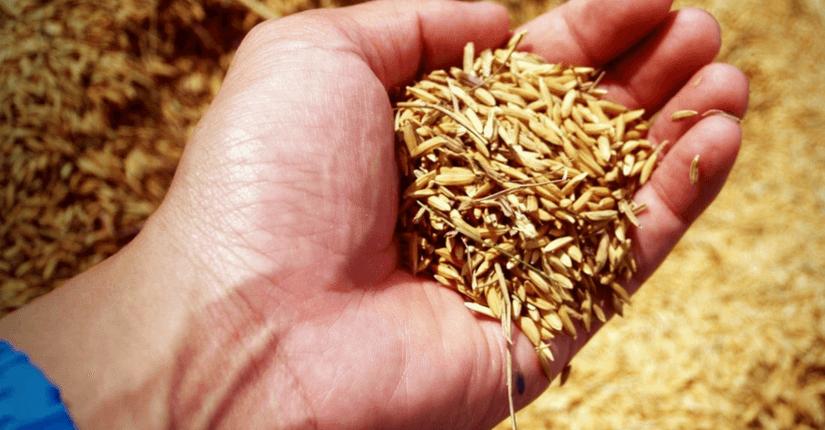 zdjęcie wpisu Precyzyjna ochrona upraw rolniczych