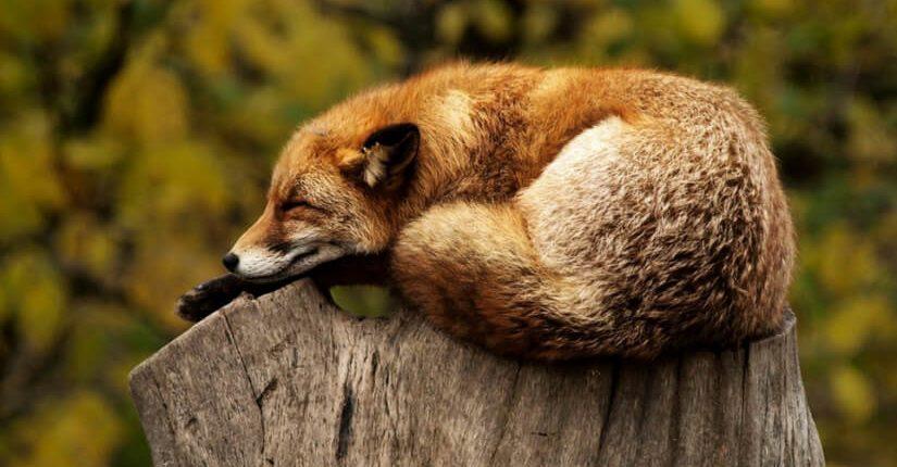 Relaks i odpoczynek. Zrób sobie wolne!
