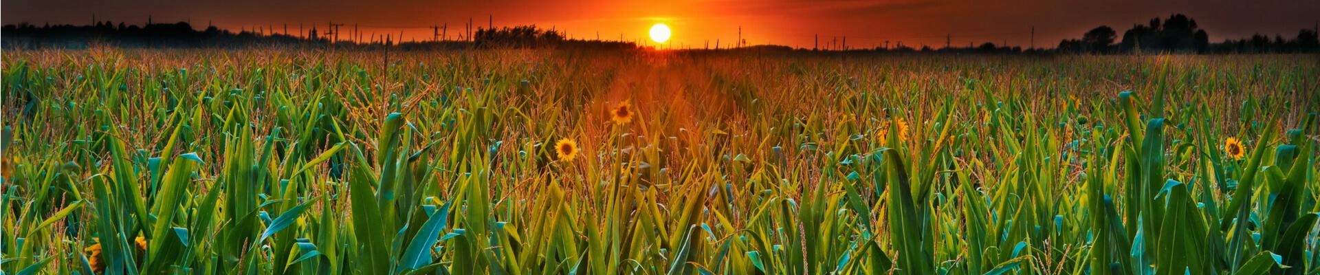 zdjęcie wyróżniające dla #agro WorldMaster