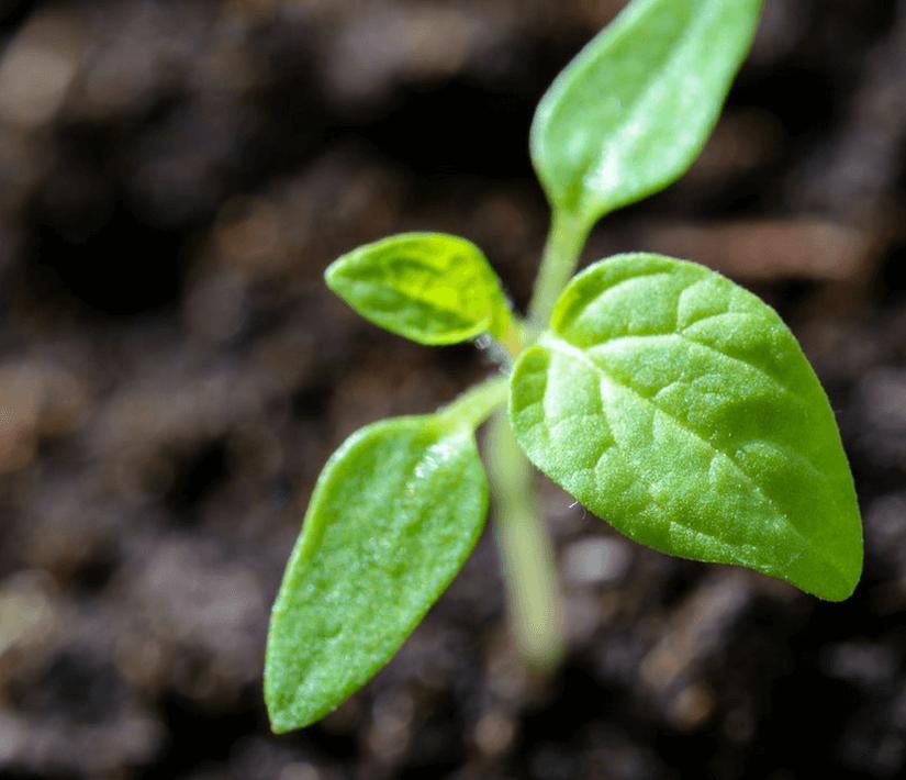 mikoryza, podziemne Relacje Sieci Roślin worldmaster