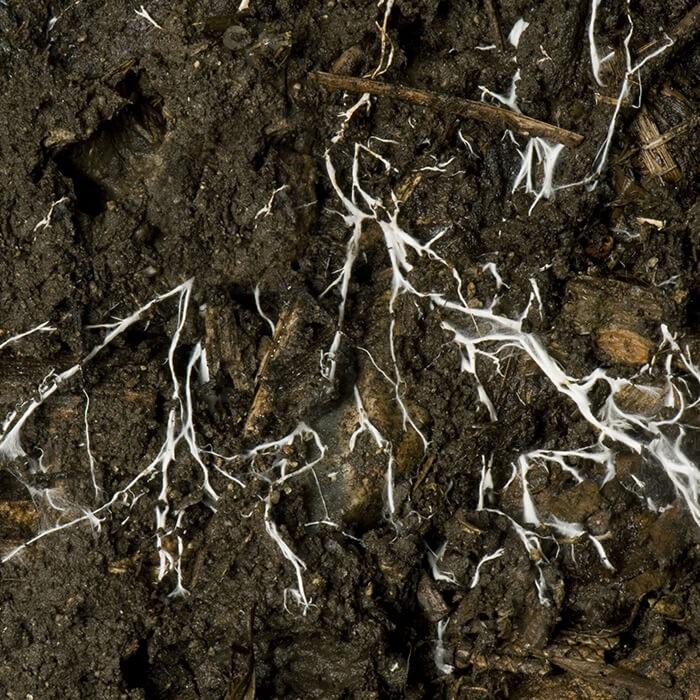 siec roślin, wolrdmaster, mikoryza