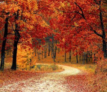 Jesień da się lubić! Pogoda to nie wszystko.