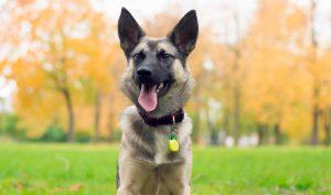 pies, pupila, spacer z psem, maksimum bezpieczeństwa