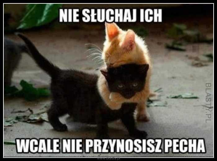 memy z kotami