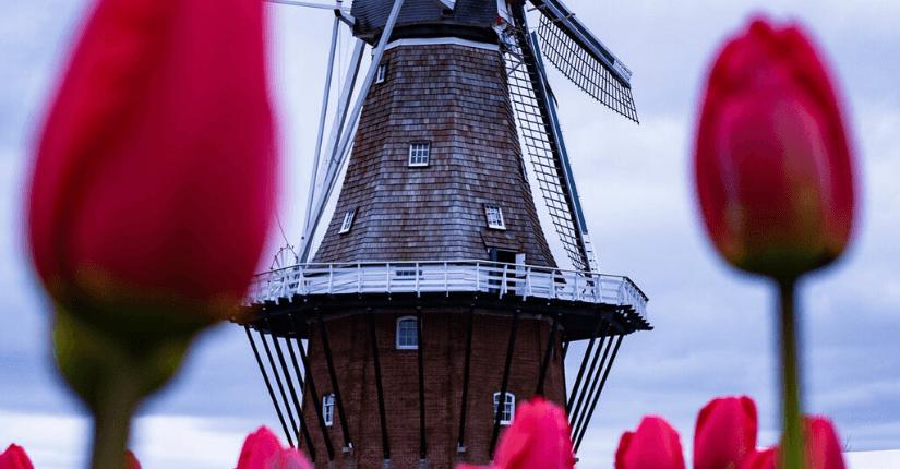zdjęcie wpisu Już nie Holandia, a Niderlandy
